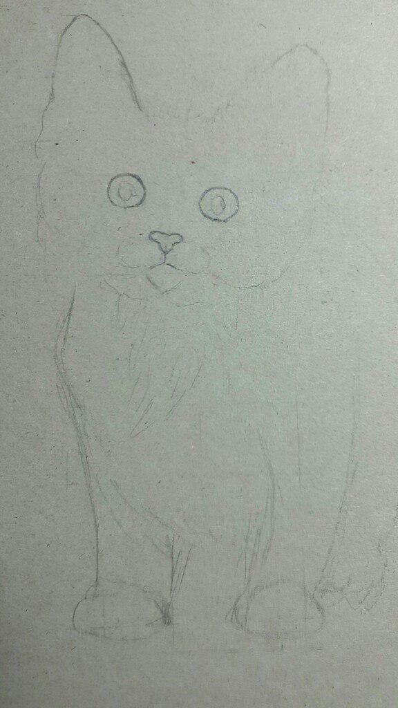 Рисуем милого котенка цветными карандашами - шаг 1