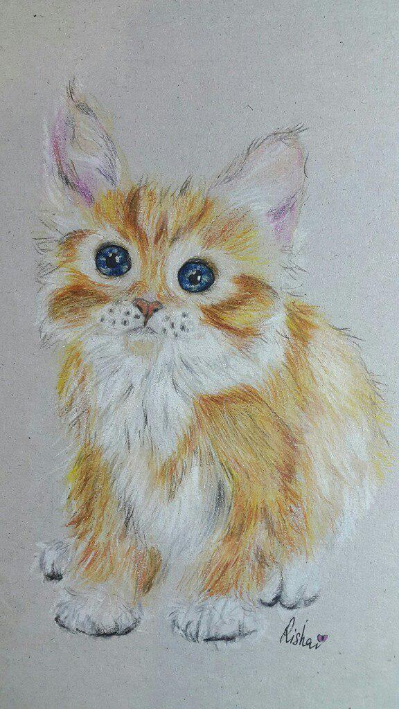 Рисуем милого котенка цветными карандашами - шаг 6