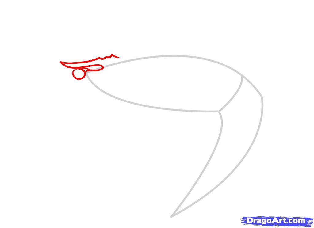 Как нарисовать креветку карандашом поэтапно