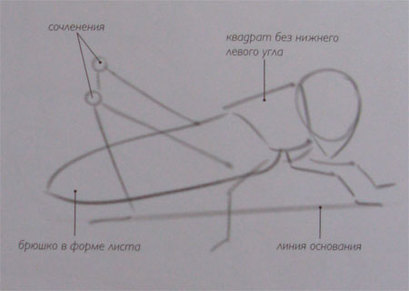 Рисуем кузнечика - шаг 1