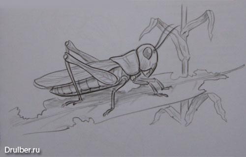 Рисуем кузнечика - шаг 4
