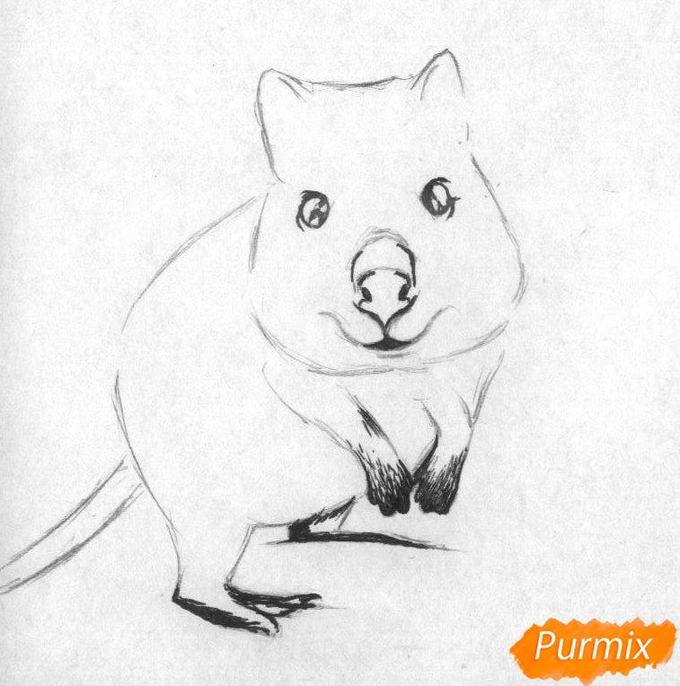 Рисуем квокка простыми карандашами и чёрной ручкой - шаг 2