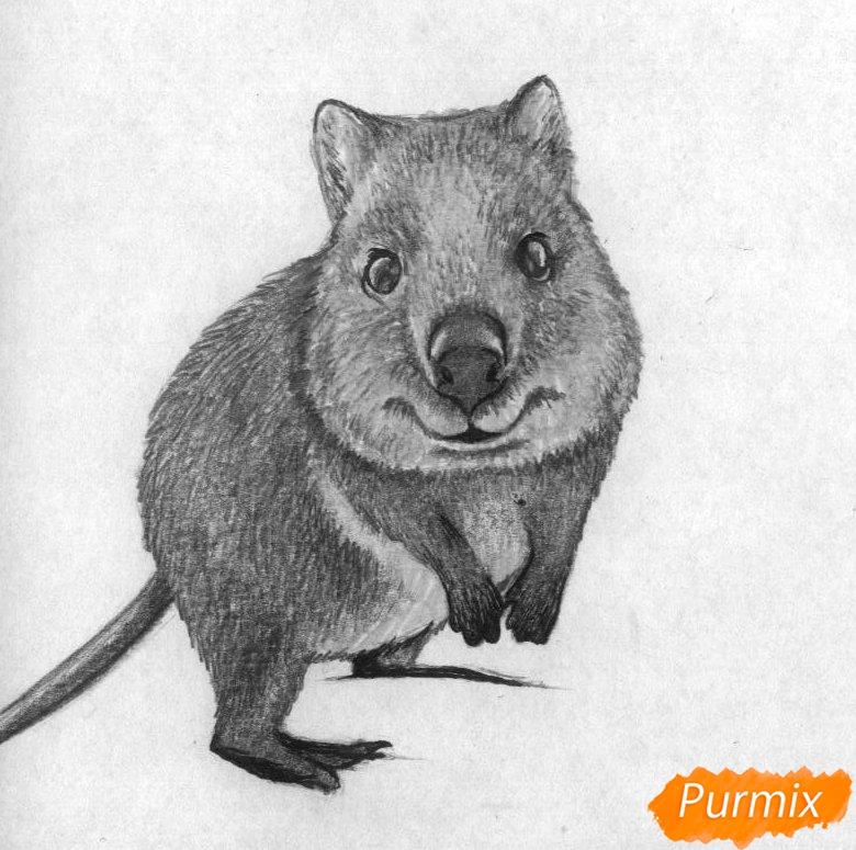 Рисуем квокка простыми карандашами и чёрной ручкой - фото 4
