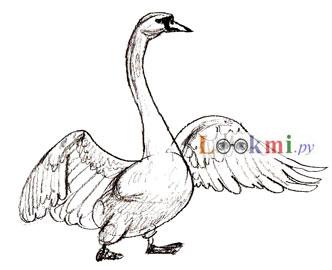 Рисуем лебедя на бумаге - шаг 5