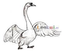лебедя на бумаге карандашом