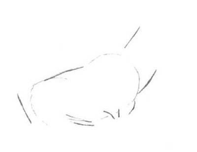 Рисуем лесного канадского оленя - шаг 2