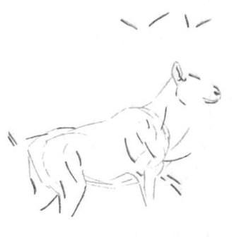 Рисуем лесного канадского оленя - шаг 4