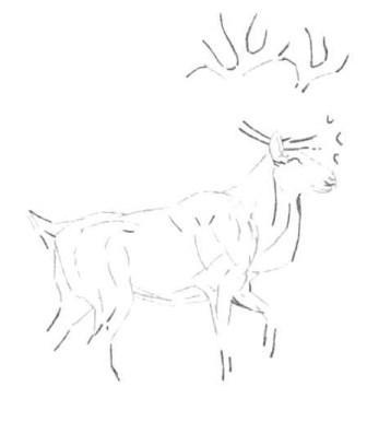 Рисуем лесного канадского оленя - шаг 5