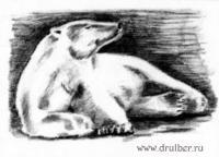 Фото лежащего белого медведя карандашом