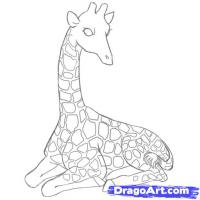 Фото лежащего жирафа карандашом