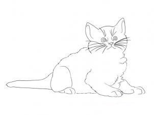 Как просто нарисовать лежащего котенка - шаг 8