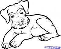 Как нарисовать лежащую собаку породы шнауцера поэтапно