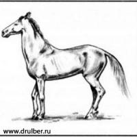 Фото Лошадь карандашом
