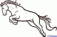 Фото лошадь в прыжке