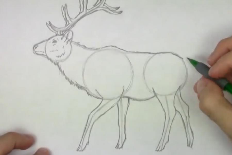 Рисуем лося  для начинающих - шаг 4
