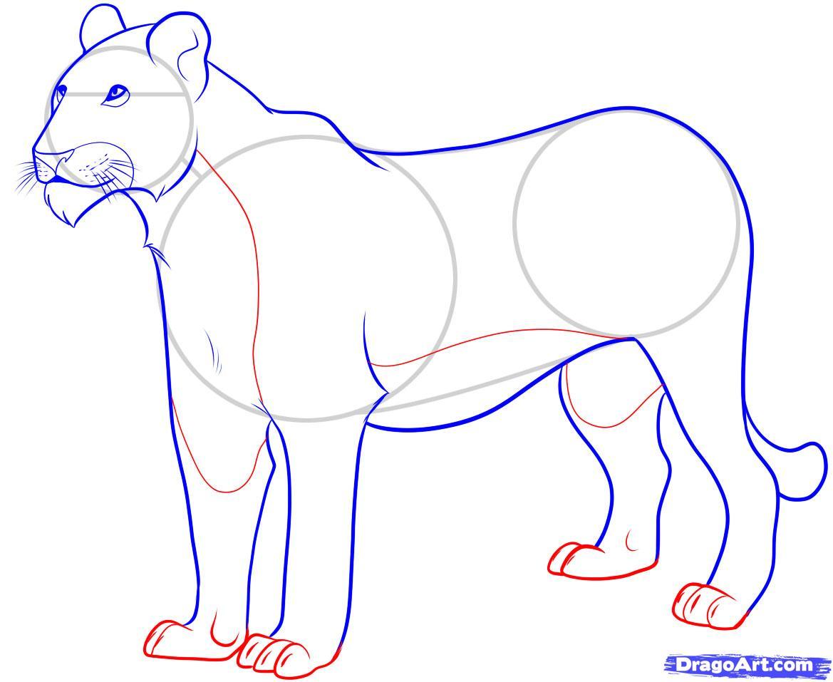 Рисуем Львицу - шаг 7