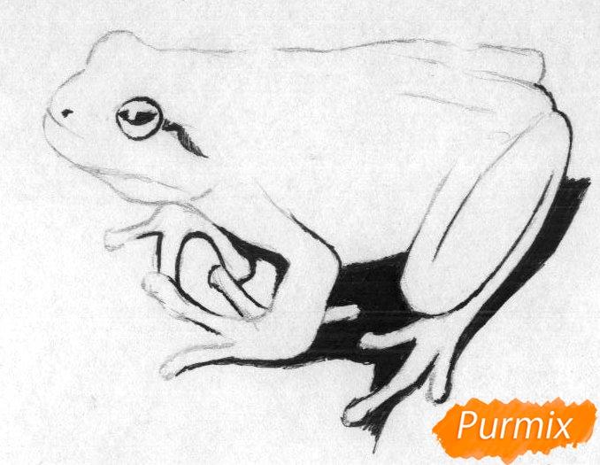 Как нарисовать лягушку простыми карандашами и чёрной ручкой поэтапно - шаг 2