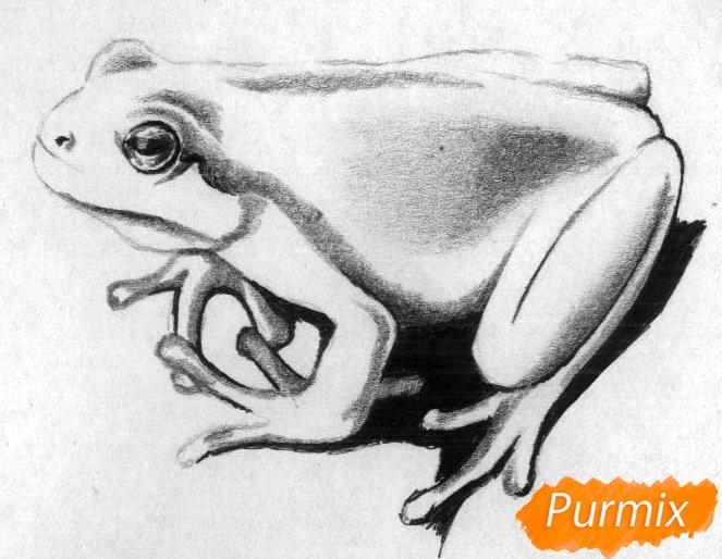 Как нарисовать лягушку простыми карандашами и чёрной ручкой поэтапно - шаг 3