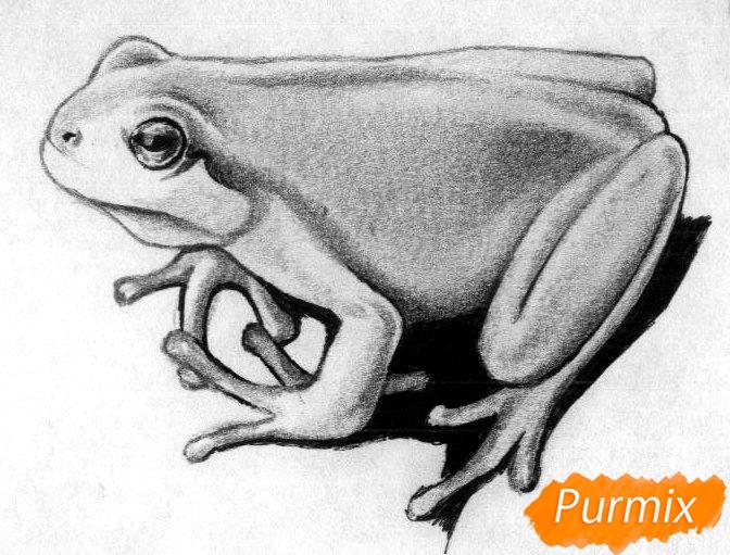 Как нарисовать лягушку простыми карандашами и чёрной ручкой поэтапно - шаг 4