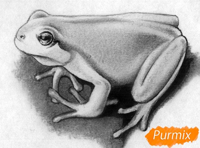 Как нарисовать лягушку простыми карандашами и чёрной ручкой поэтапно