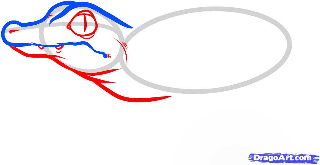Рисуем маленького Крокодильчика - шаг 3