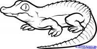 Фото маленького Крокодильчика карандашом