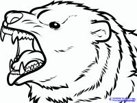 Фото морду медведя гризли карандашом