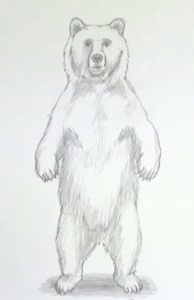 картинки медведя простым карандашом