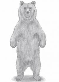 медведя стоящего на задних лапах
