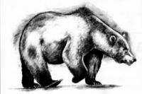 Фото медведя в движении карандашом