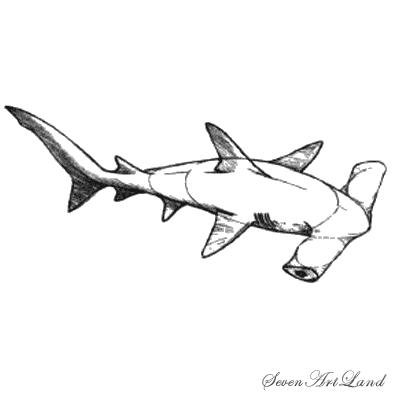 Рисуем молотоголовую акулу - шаг 7