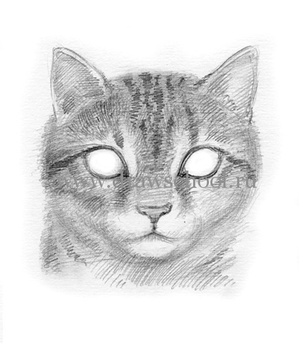 Рисуем мордочку кошки простым - шаг 10