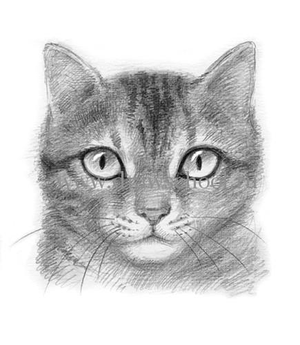 Как нарисовать мордочку кошки простым карандашом поэтапно