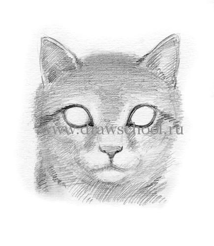 Рисуем мордочку кошки простым - шаг 9
