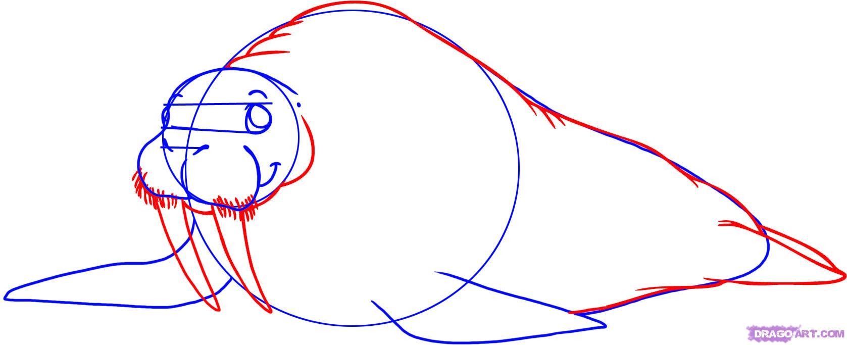 Рисуем моржа - шаг 3