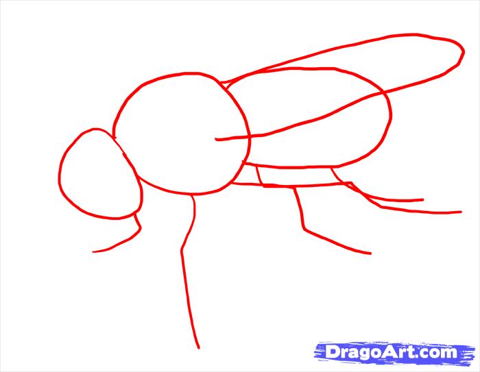 Как нарисовать муху поэтапно