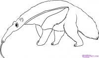 Как нарисовать Муравьеда карандашом поэтапно