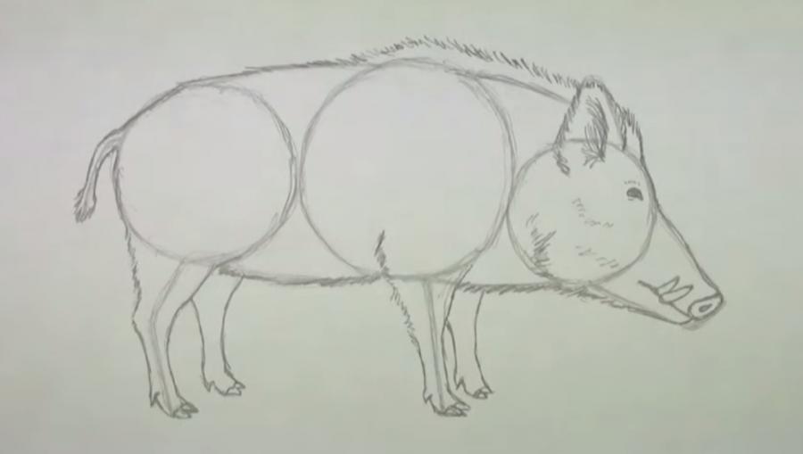 Как легко нарисовать кабана - фото 4