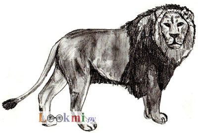 Как просто нарисовать льва - шаг 7