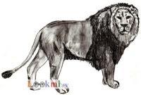 на бумаге льва карандашом