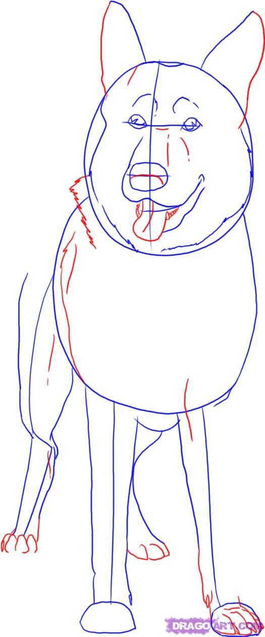 Рисуем овчарку   для начинающих - шаг 3