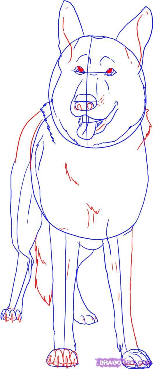 Рисуем овчарку   для начинающих - шаг 4