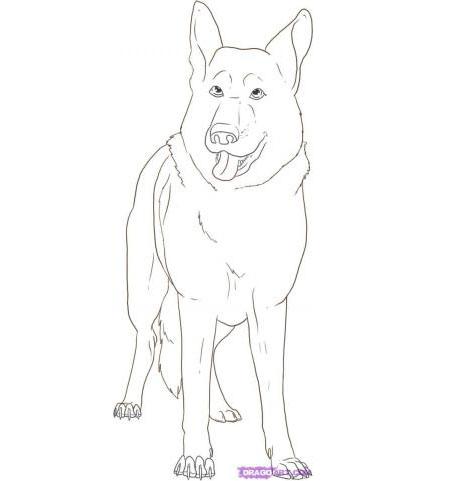 Как нарисовать овчарку карандашом поэтапно
