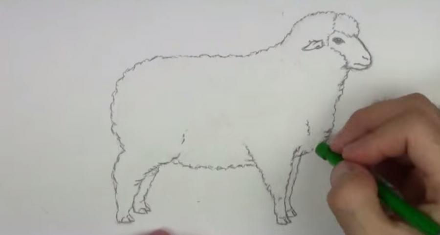 Рисуем овцу простым  на бумаге - шаг 4