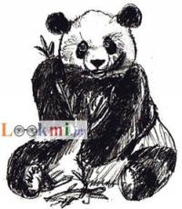 Фото панду на бумаге карандашом