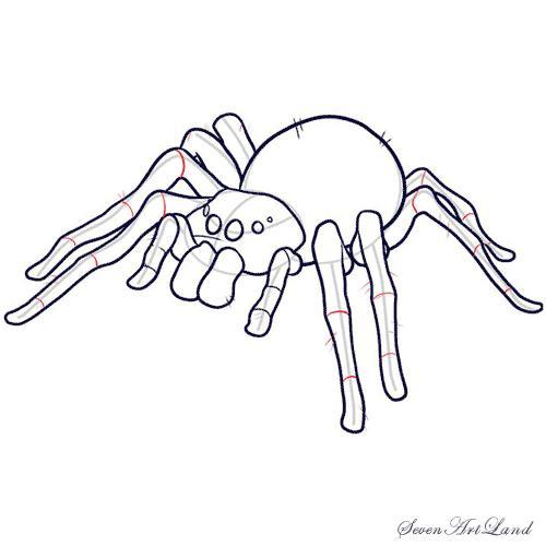 Рисуем паука-птицееда - шаг 10