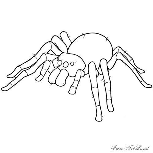 Рисуем паука-птицееда - шаг 11