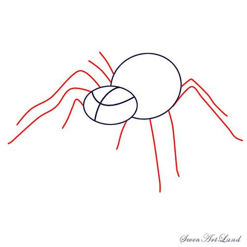 Рисуем паука-птицееда - шаг 3
