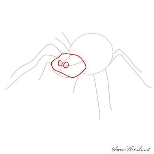 Рисуем паука-птицееда - шаг 4