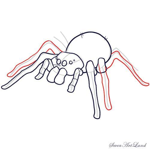 Рисуем паука-птицееда - шаг 8